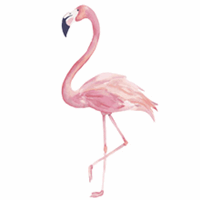 Flamingo Contracting